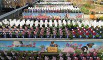 Plantes vivaces Jardinerie Anthemis Tournai