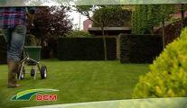 Engrais DCM contre la mousse dans le gazon: Jardinerie Anthemis
