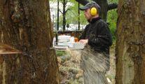 Elagage et d'Abattage d'Arbres par Garden Clean