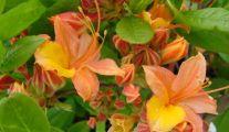 Les plantes de jardin chez Groendekor