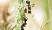 Produit anti-fourmis de Bayer