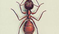 Bayer, produit anti fourmis