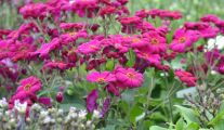 Mieux Connaître les Plantes Vivaces