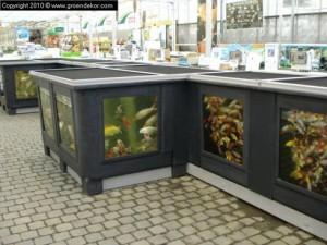 Maladie des hortensias groendekor uccle for Amenagement bassin poisson exterieur