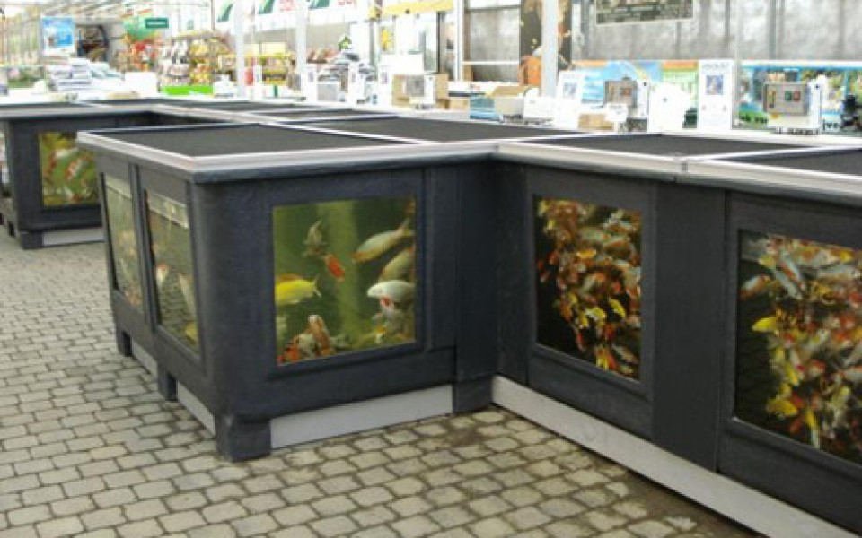 Amenagement bassin poissons ext rieur - Amenagement bassin exterieur ...