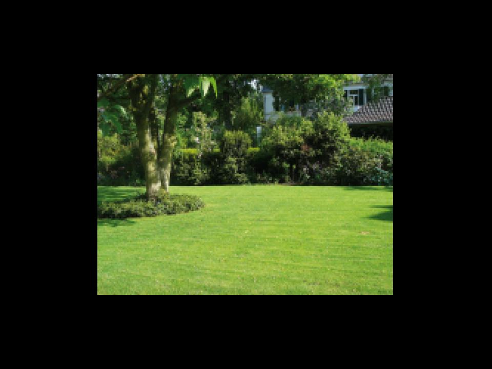 les larves de la tipule bayer explique jardin et decoration amenagement et entretien belgique. Black Bedroom Furniture Sets. Home Design Ideas