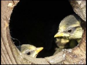 Nids pour les Oiseaux Belgique, Maison d'oiseau en Bois Wallonie