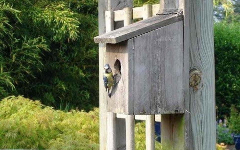 Nids pour les oiseaux belgique maison d 39 oiseau en bois wallonie - Maison oiseau bois ...