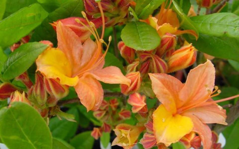 Planter vivaces fleurs annuelles halle for Jardin fleurs vivaces