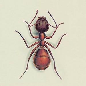Produit anti nuisible bayer pour haies for Anti fourmis maison
