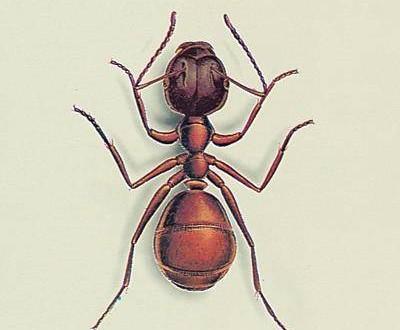 fourmis dans la maison save maison de fourmis image. Black Bedroom Furniture Sets. Home Design Ideas