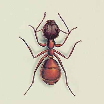 tuer les fourmis produit anti fourmis anti fourmis maison. Black Bedroom Furniture Sets. Home Design Ideas