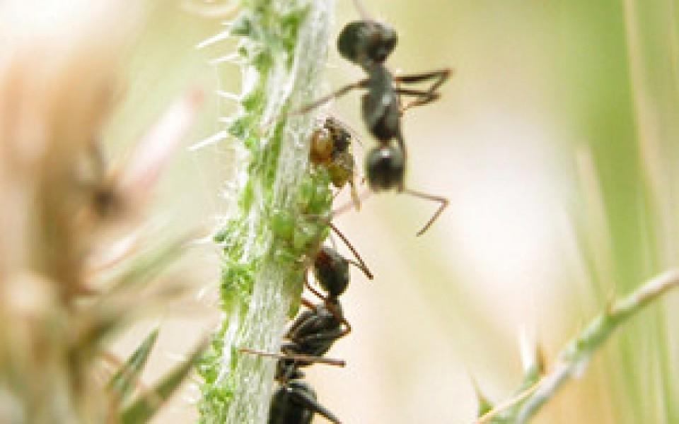 Produit anti fourmis de bayer for Anti fourmis dans la maison