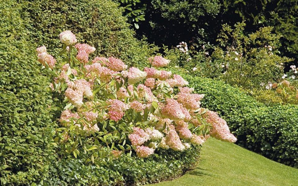 Devis am nagement jardin waterloo lasne bruxelles for Amenagement pour jardin