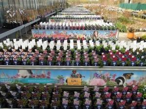 Les crans de jardin et les panneaux en bois for Brico jardin waterloo