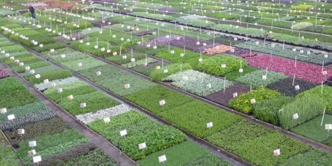 Les plantes vivaces de guido van de steen for Les plantes vivaces