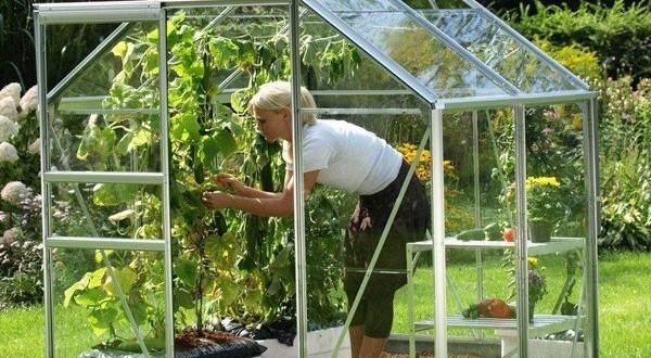 Serres jardin gosselies fleurus nivelles pont celles for Abri de jardin jardiland