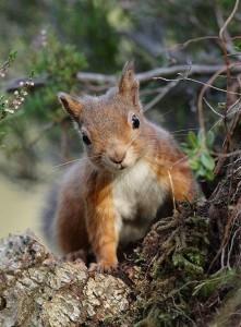 Attirer un Ecureuil dans son jardin