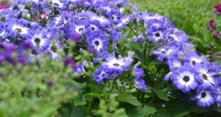 Abeels garden jardinerie jardinier plantes fleurs for Entretien jardin waremme
