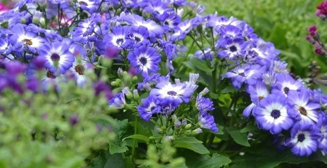 Jardin et decoration amenagement et entretien belgique for Entretien plantes vivaces