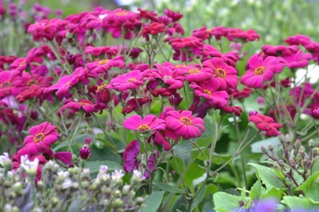 Mieux conna tre les plantes vivaces for Les plantes vivaces