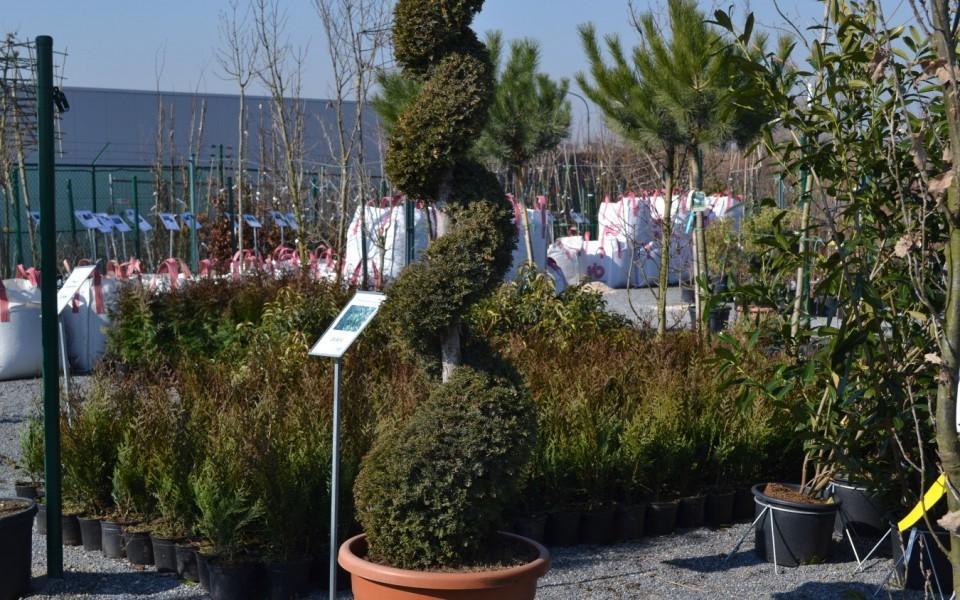 Pepiniere arbustes persistants for Entretien jardin waremme