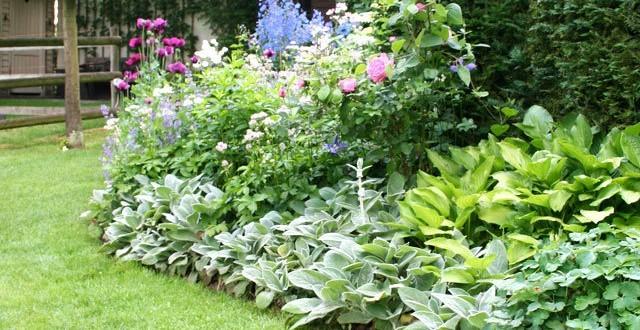 P pini re plantes vivaces belgique for Plantes belgique