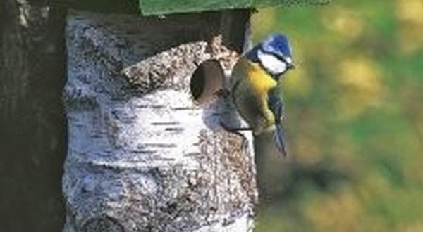 Nichoir pour oiseaux des jardins vivara for Jardinerie des jardins