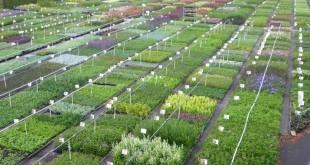 Plantes vivaces Guido Van de Steen