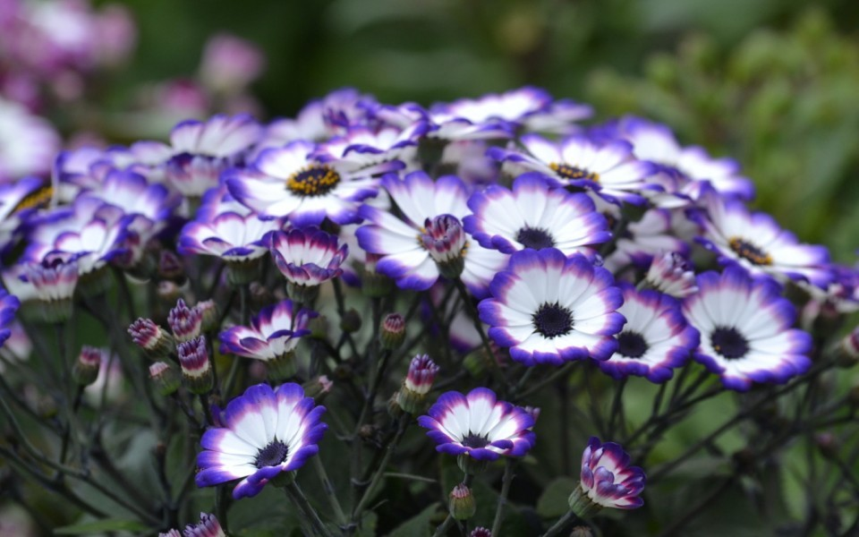 Les plantes vivaces p pini re garden abeels li ge for Fleurs vivaces rustiques