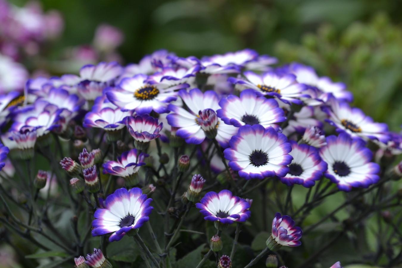 Les plantes vivaces p pini re garden abeels li ge for Entretien jardin waremme