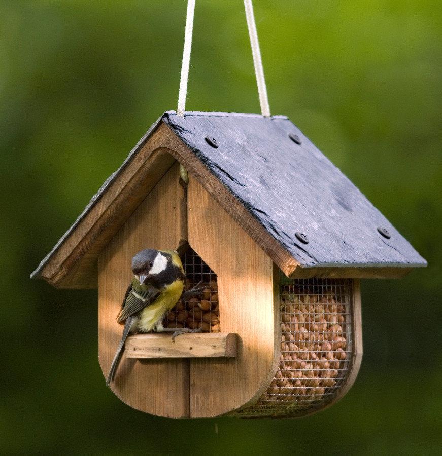 Nourriture pour oiseau de jardin for Oiseau decoratif jardin