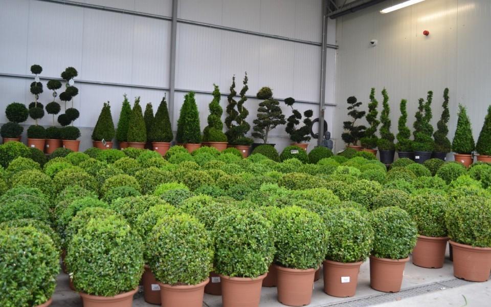 arbres croissance rapide liste ooreka arbres a. Black Bedroom Furniture Sets. Home Design Ideas