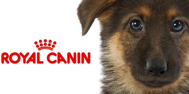 Animalerie Province de Namur: Colombo Expert Shop Royal Canin