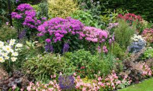 les plantes vivaces