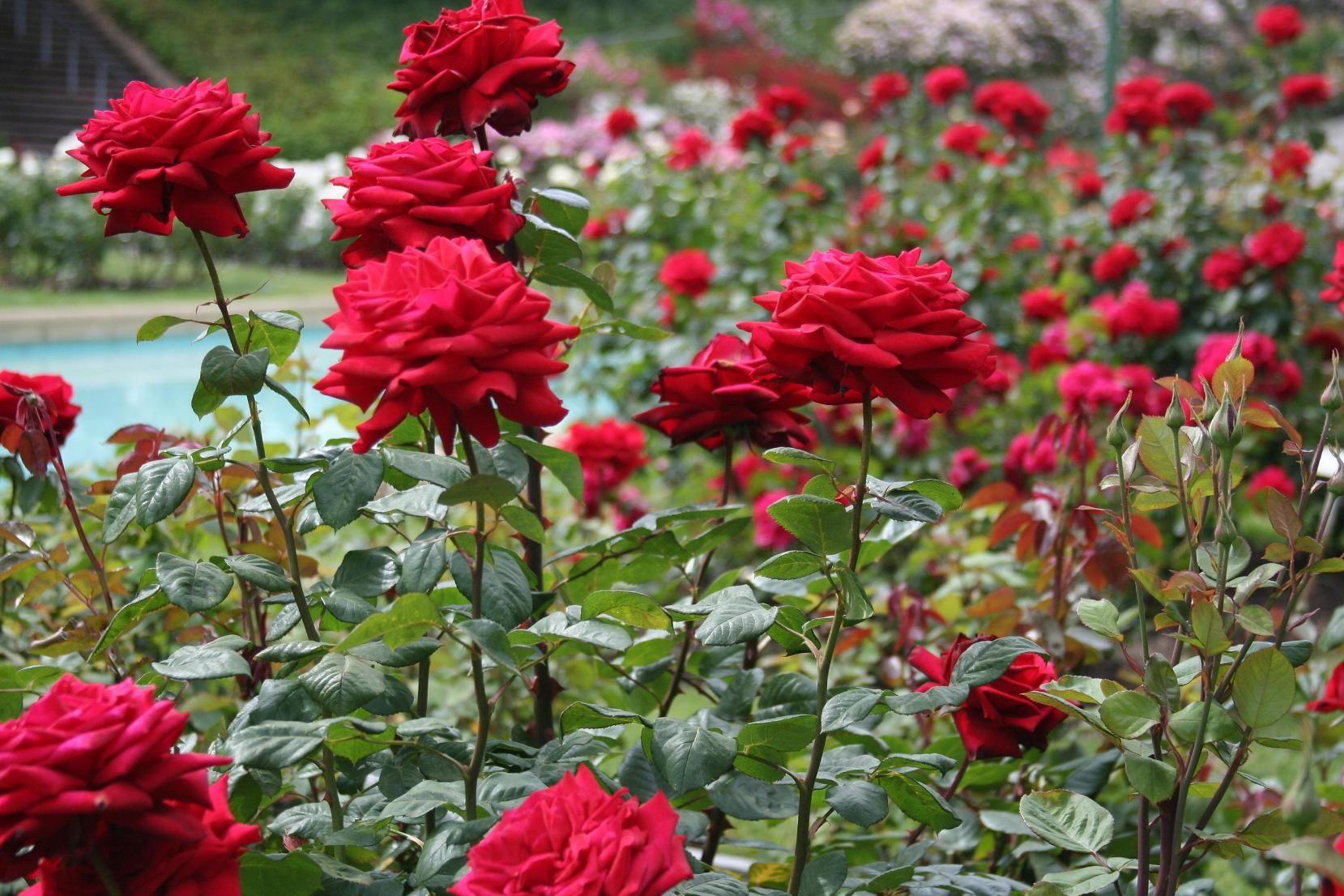 Entretien du jardin au commencement du mois de mars for Entretien jardin mois de fevrier