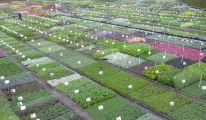 Les plantes vivaces de Guido Van de Steen