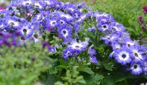 Comment Planter des Plantes Vivaces ?