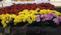 Jardinerie près de Beaufays: Faune et Flore