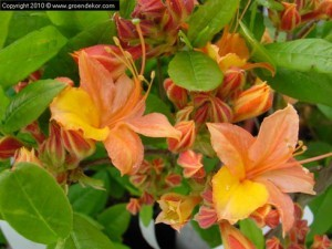 Planter Vivaces, Fleurs Annuelles, Halle