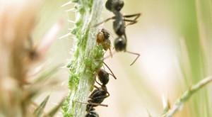 Produit Anti Fourmis Efficace, Insecticides Fourmis Maison