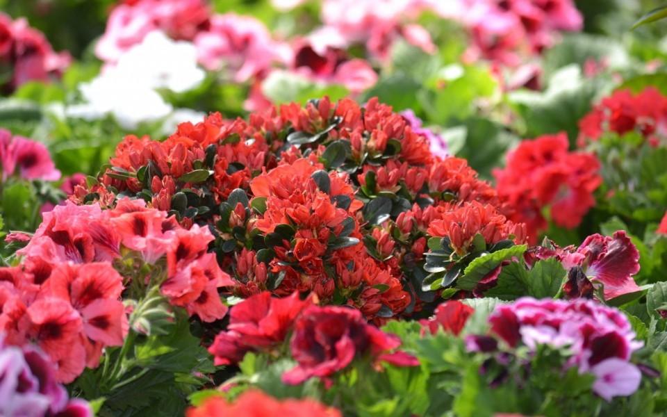 Plantes Vivaces Grimpantes à Feuillage Persistant Groendekor Uccle
