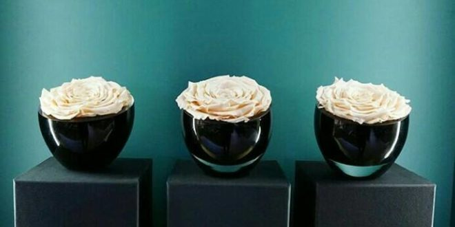 The Infinite Rose (white)