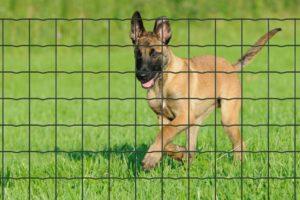 Comment protéger vos animaux domestiques ?