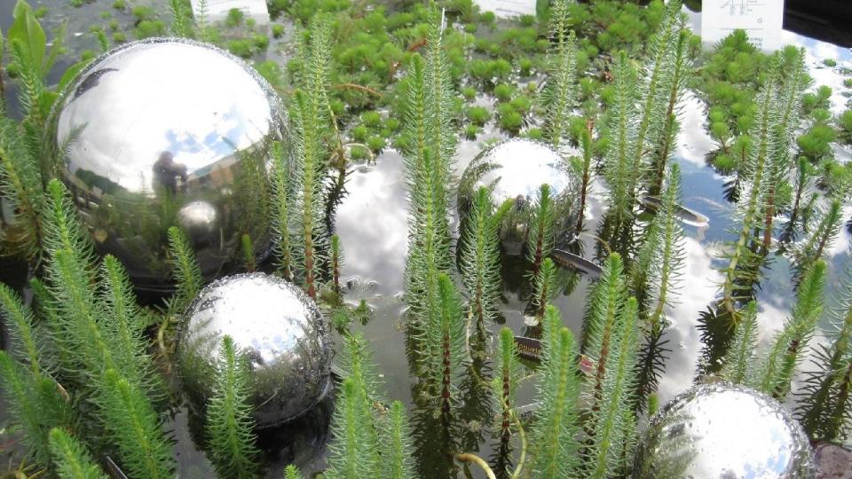 plantes oxygenantes etang namur
